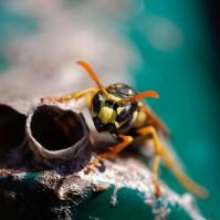 Wasps and Bad Dreams