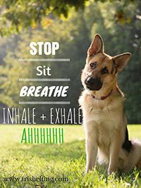 Stop-Sit-Breathe Poster - Trish Elting JPG