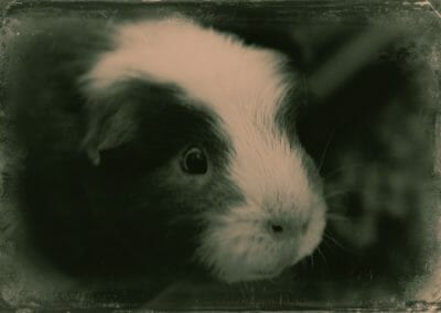 that old time piggy